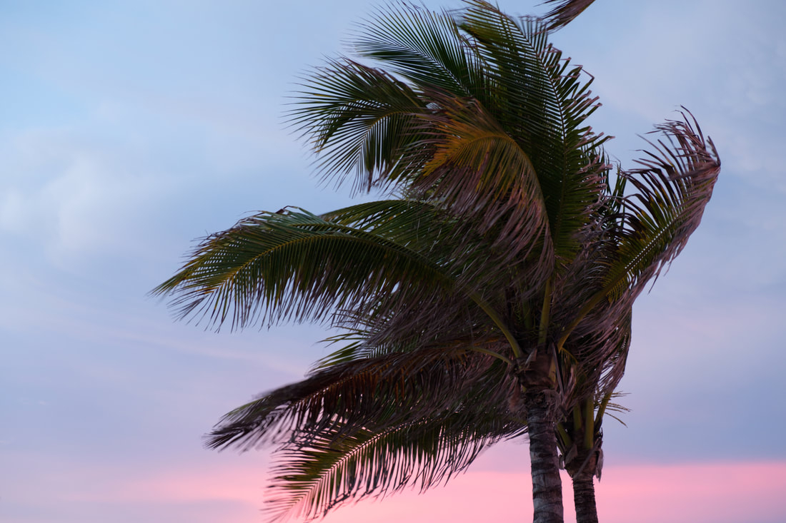 Palm Tree at Sunset on Hollywood Beach